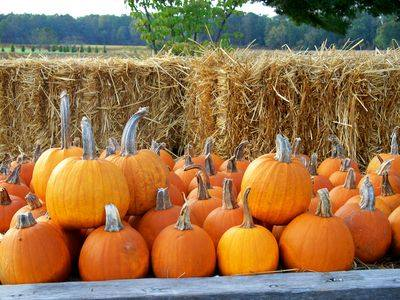 Finding Pumpkins in Polk and More…2014